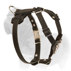 Puppy harness for Mastiff with silvered studs and rust proof hardware