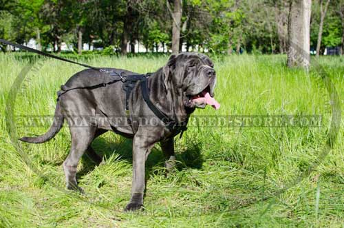 Easy Adjustable Leather Harness for Mastiff Breeds