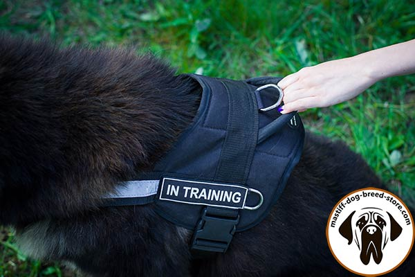 Dog-friendly nylon Mastiff harness with comfy handle