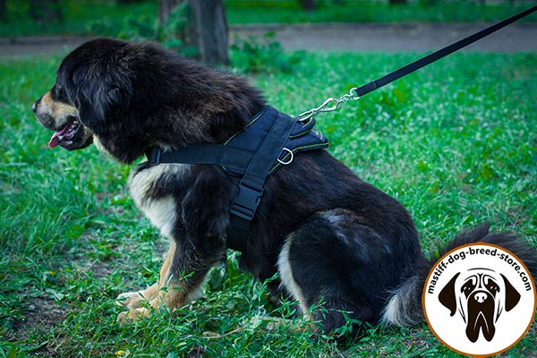 Top flight pulling nylon Mastiff harness for effective training