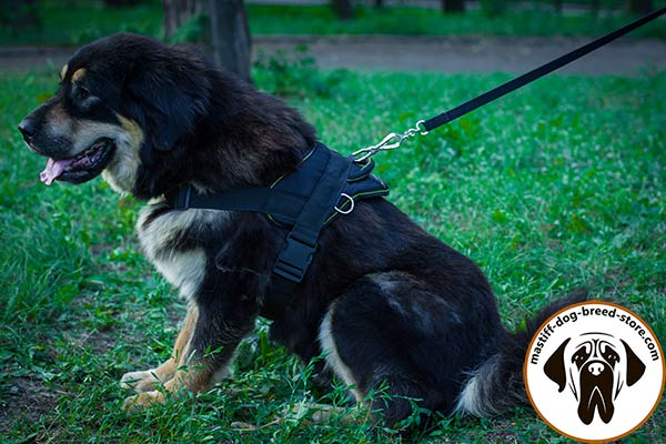 Reliable nylon Mastiff harness for pulling work