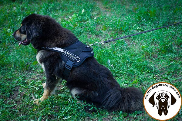 Upgraded nylon canine harness for Mastiff with ID patches for easy identification