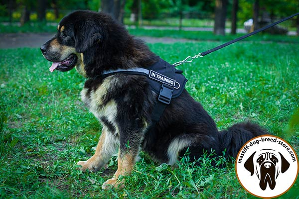 Comfy nylon canine harness for Mastiff pulling training