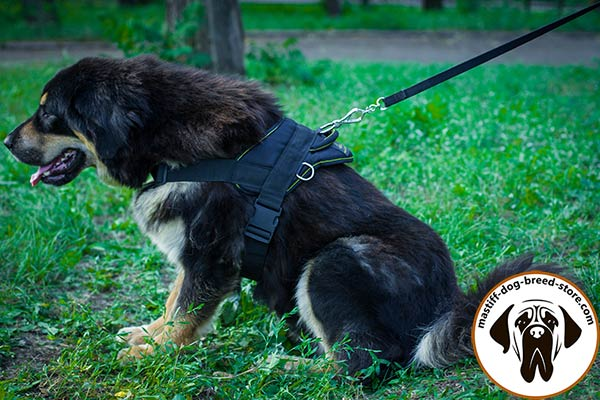 Duly stitched nylon canine harness for Mastiff pulling work