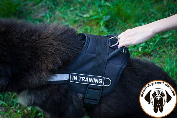 Lasting nylon canine harness for Mastiff with quick-release buckle