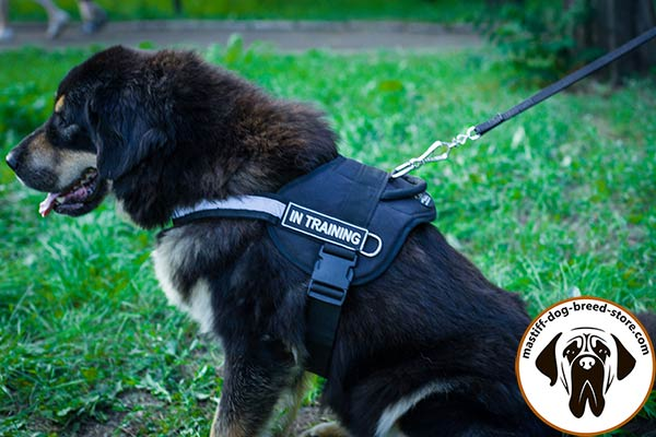 Well thought-out nylon dog harness for Mastiff with ID patches for easy identification