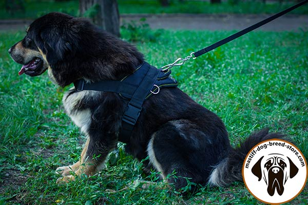 All-weather nylon dog harness for Mastiff