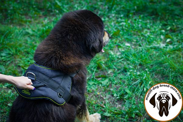 Nylon dog harness for Mastiff with easy-grip handle