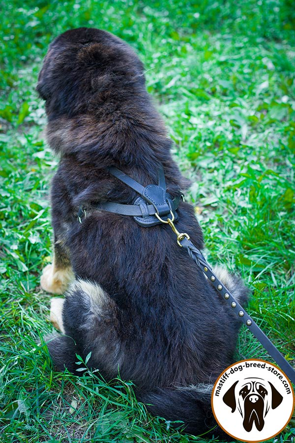 Pulling leather Mastiff harness with rust-proof brass D-ring
