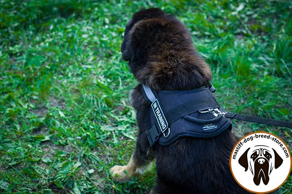 Reliable Nylon Mastiff harness with 3 D-rings for pulling activities