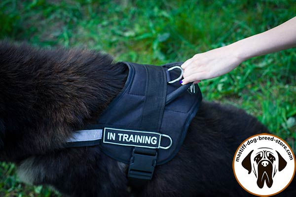 Comfy-to-wear pulling nylon Mastiff harness with handle