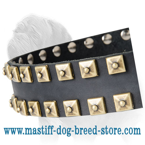 Leather Mastiff Collar with Caterpillar Studs for Daily Walking and Exercising