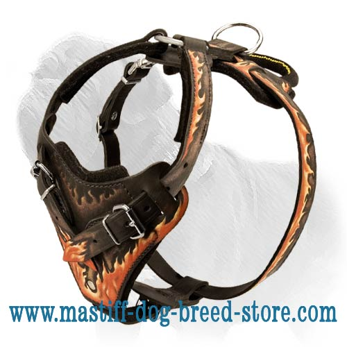 Mastiff Leather Harness for Professional Attack Training and Daily Walks