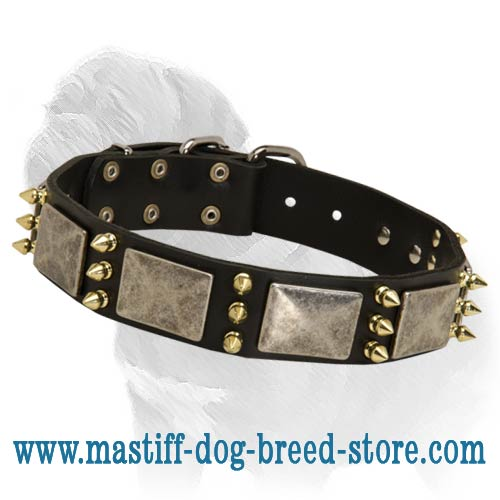 Designer Leather Dog Collar with Plates and Spikes for Mastiff Walking/Training