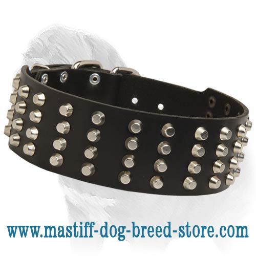 Extra WIde Leather Collar with 4 Rows of Nickel Pyramids for Mastiff Walking