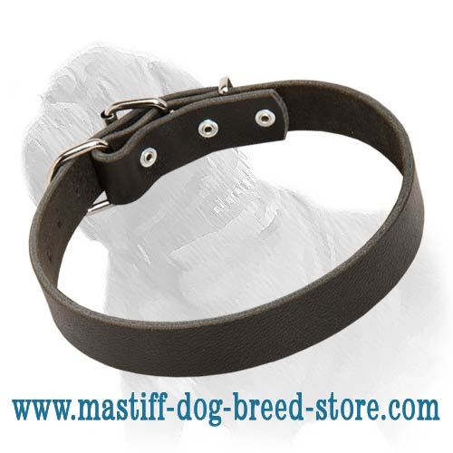 Fantastic Leather Buckle Collar for Daily Walks and Training of Your Mastiff