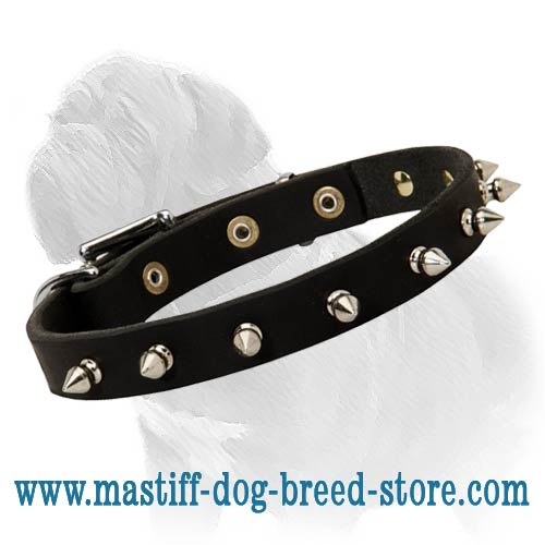 Narrow Leather Dog Collar with Nickel Spikes for Mastiff Walking