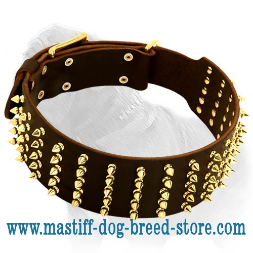 Extra Wide Leather Collar with Gold Color Spikes for Mastiff Walking