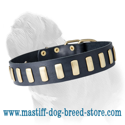 Leather Dog Collar with Brass Plates for Fashionable Mastiff Walking