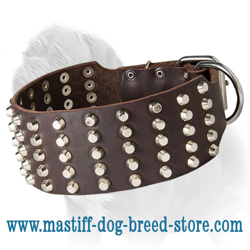 Strong Wide Mastiff Dog Collar with Nickel-Plated Studs