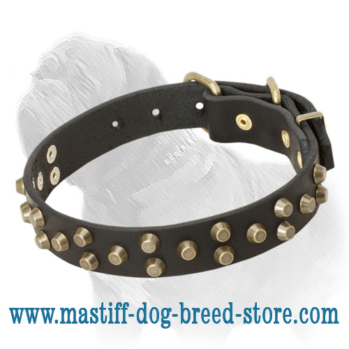 Impressive Mastiff Dog Collar with Brass Studs