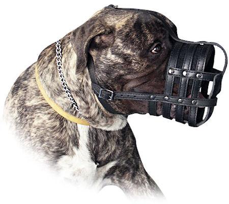 Leather Basket Dog Muzzle for my Mastiff