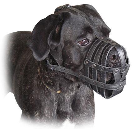 Leather Basket Dog Muzzle for my canecorso