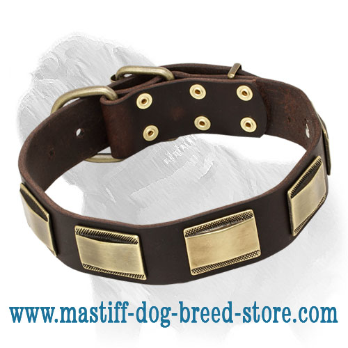 'Julius Caesar' Mastiff Dog Collar with Large Brass Plates
