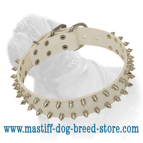 White Rose with Thorns Mastiff Dog Collar