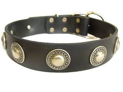Leather  Dog Collar with silver conchos for Mustiff dog
