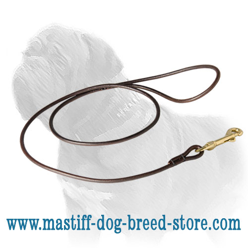 Mastiff dog lead for shows, with brass snap hook