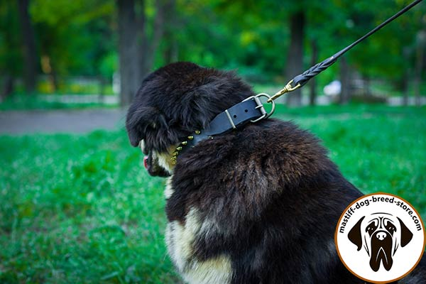 Mastiff leather leash with reliable handle for safe walking