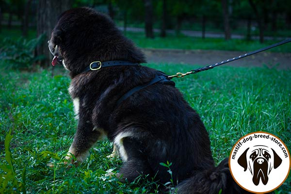 Mastiff leather leash with rustless brass plated hardware for better comfort