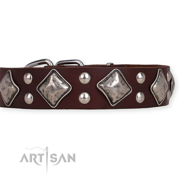Full grain natural leather dog collar with unique corrosion resistant studs