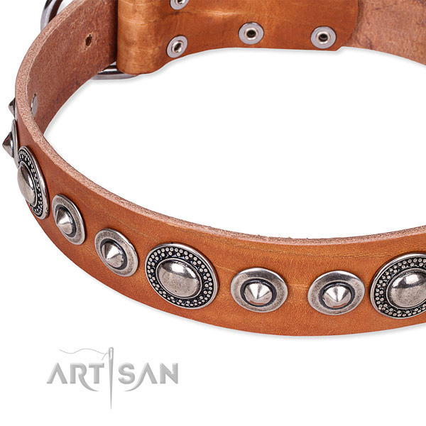 Fancy walking studded dog collar of finest quality full grain genuine leather