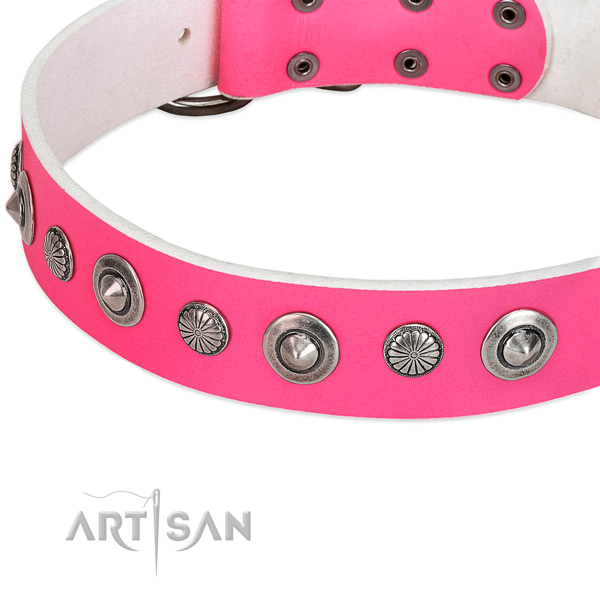 Leather collar with corrosion resistant hardware for your impressive four-legged friend