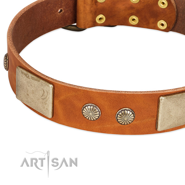 Rust-proof adornments on full grain leather dog collar for your dog