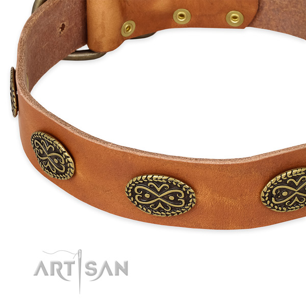 Adorned leather collar for your handsome four-legged friend