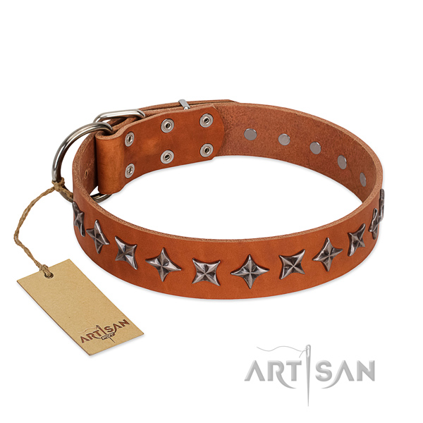 Everyday walking dog collar of top quality genuine leather with adornments