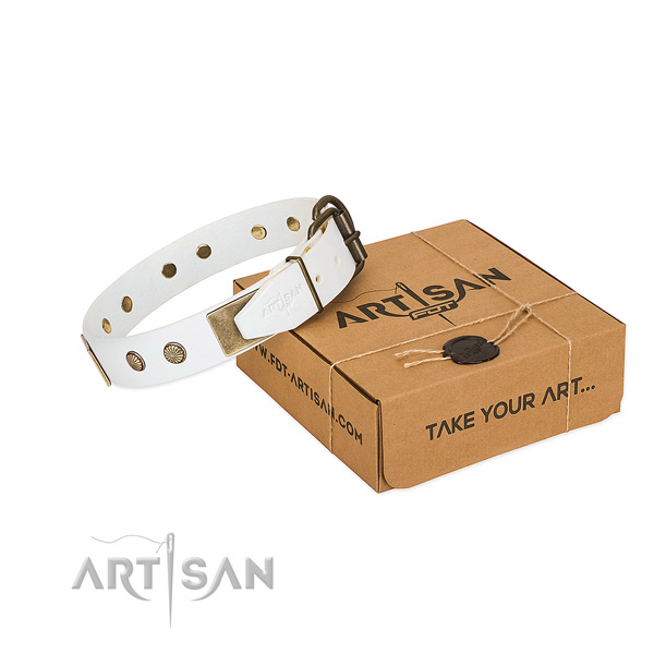Rust-proof hardware on dog collar for walking