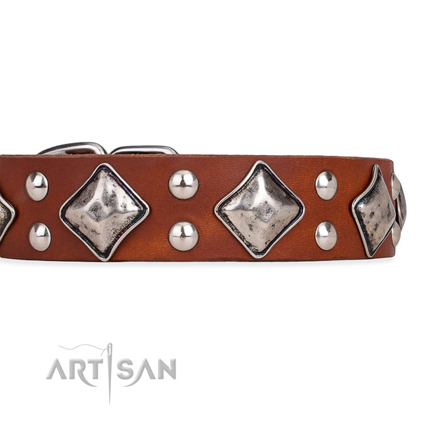Natural leather dog collar with unique strong embellishments