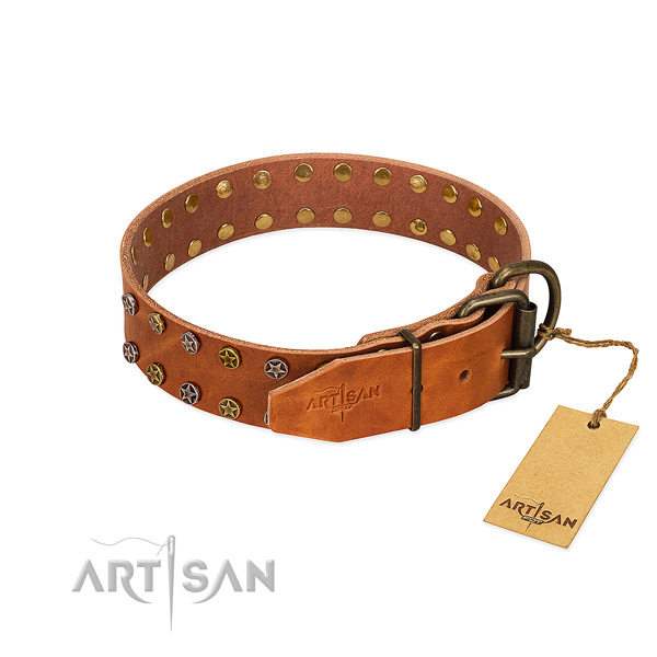 Comfy wearing full grain genuine leather dog collar with trendy adornments