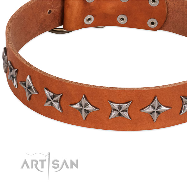 Daily walking decorated dog collar of quality natural leather