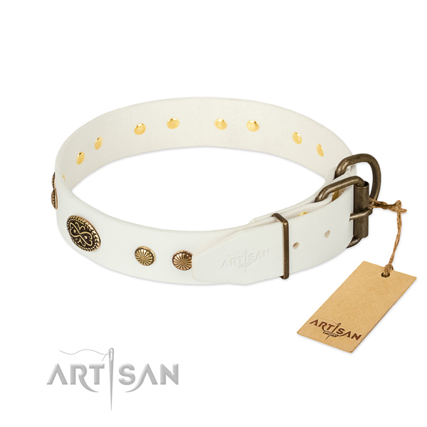 Corrosion resistant studs on leather dog collar for your doggie