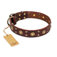 """Caprice of Fashion"" FDT Artisan Brown Leather Mastiff Collar with Round Decorations"