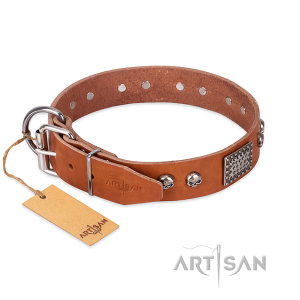 Rust-proof studs on basic training dog collar