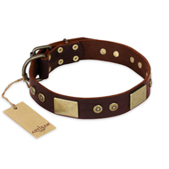 """Shining Armour"" FDT Artisan Brown Leather Mastiff Collar with Decorations"