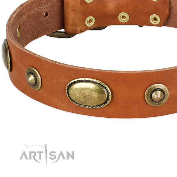 Corrosion proof fittings on natural leather dog collar for your dog