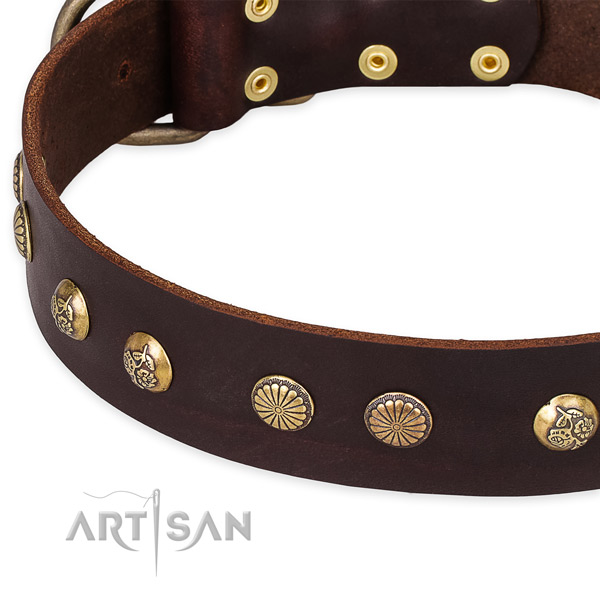 Full grain natural leather collar with corrosion resistant hardware for your stylish canine
