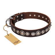 """Step and Sparkle"" FDT Artisan Glamorous Studded Brown Leather Mastiff Collar"